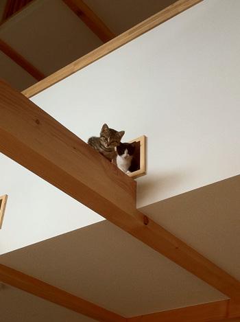 猫と暮らす家_d0031378_9582443.jpg