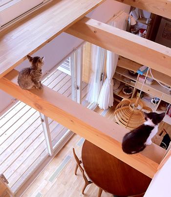 猫と暮らす家_d0031378_9582930.jpg