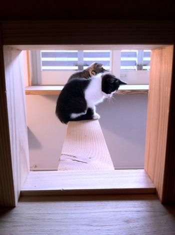 猫と暮らす家_d0031378_9583372.jpg