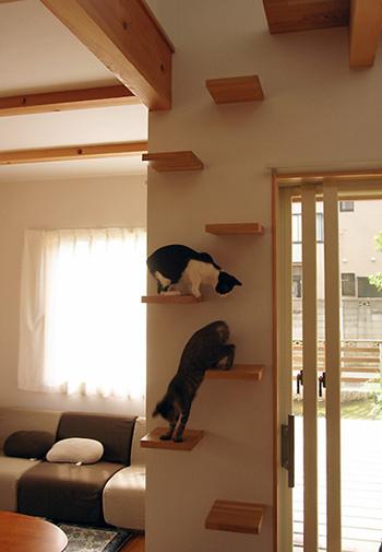 猫と暮らす家_d0031378_9583974.jpg