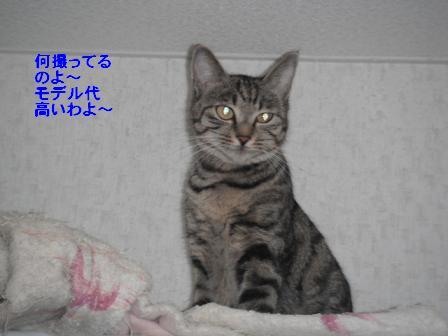 b0112380_19472030.jpg