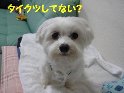 b0193480_16425020.jpg