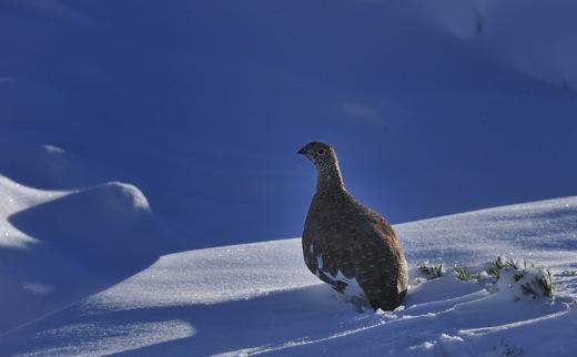 下山してくる登山者から(白馬方面は雪のため行けれないよ)の情報で少し暗い気分に..._b0194185_23203378.jpg