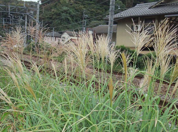 鎌ケ谷市でもワクチン誤接種_b0206085_22121552.jpg