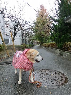 雨の日の変ったオトモダチ(?)_e0222588_180359.jpg