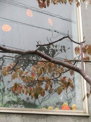 雨の日の変ったオトモダチ(?)_e0222588_1822526.jpg