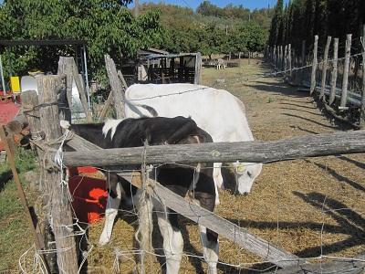 300年以上続いている農家の台所 ①_a0154793_13331180.jpg