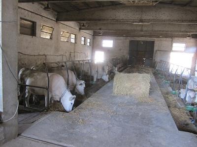 300年以上続いている農家の台所 ①_a0154793_14573981.jpg
