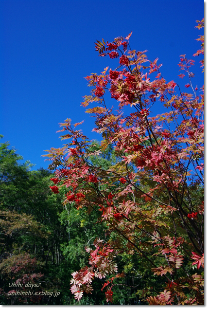 小さな秋を見つけに...日光 湯の湖・小田代ヶ原_f0179404_21382553.jpg