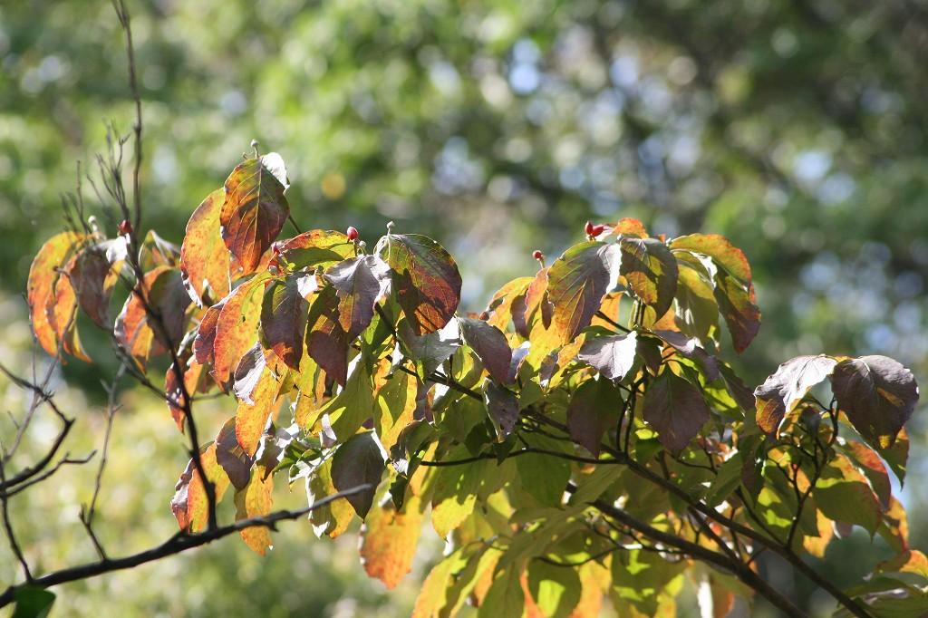 秋の植物_b0049307_14361836.jpg