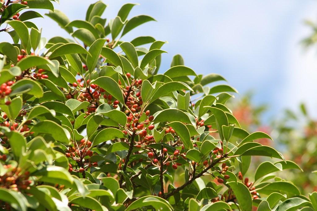 秋の植物_b0049307_1436271.jpg