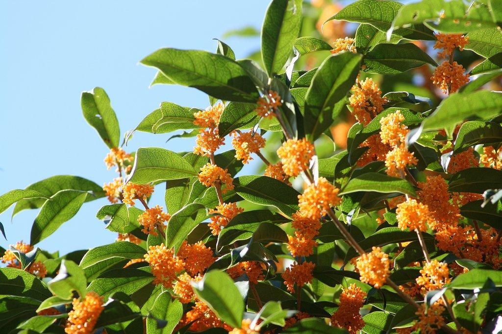 秋の植物_b0049307_1436623.jpg