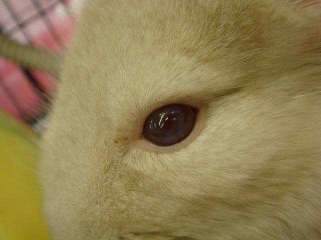 ウサギ・チンチラ・ハムスター_f0189122_1511176.jpg