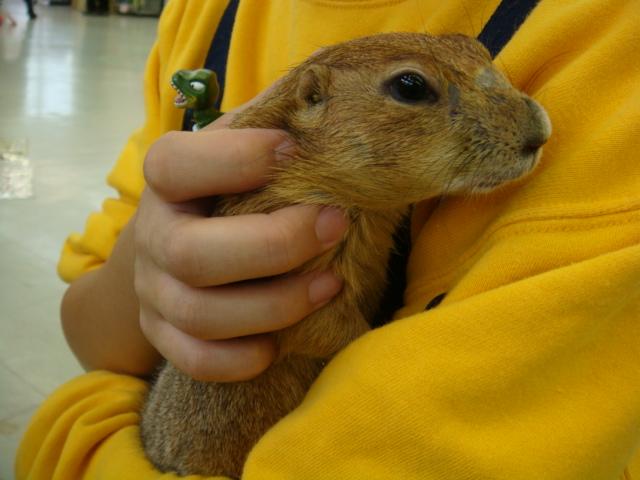 ウサギ・チンチラ・ハムスター_f0189122_15182815.jpg