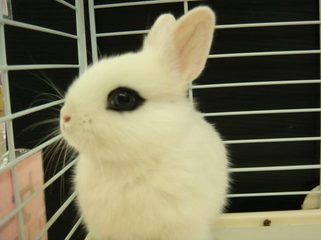 ウサギ・チンチラ・ハムスター_f0189122_152112.jpg