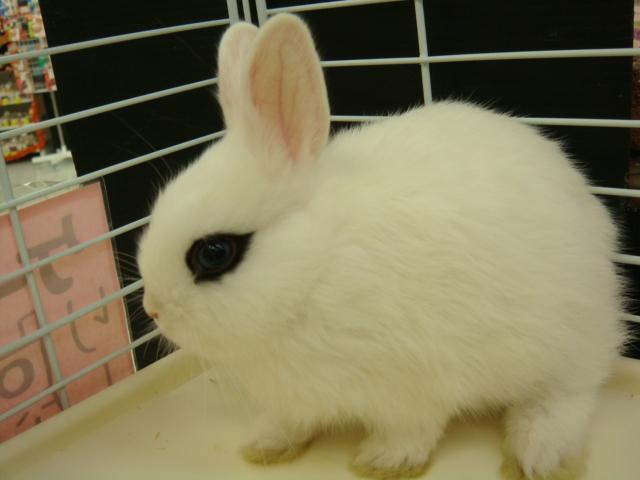 ウサギ・チンチラ・ハムスター_f0189122_1522642.jpg