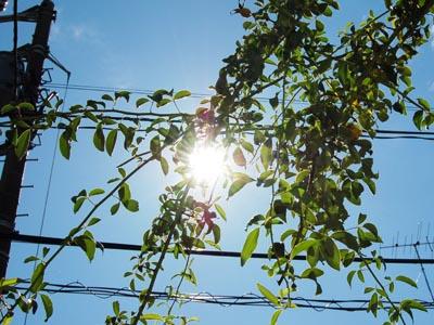 秋晴れ。夏の暑さ。_a0026127_21401335.jpg