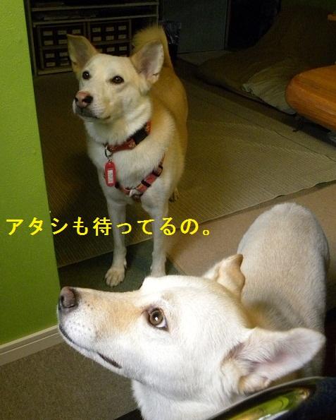 b0201756_1740456.jpg