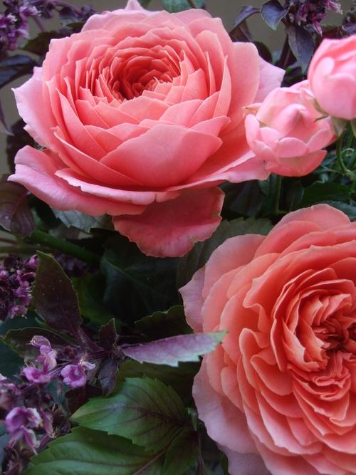 オークリーフ(薔薇・ロマンティックアンティークのアレンジメント)_f0049672_16383577.jpg