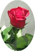 a0238184_2354990.jpg