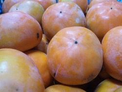 西村早生(にしむらわせ)柿の収穫を終え、伊豆早生柿へ。_f0018099_174213.jpg