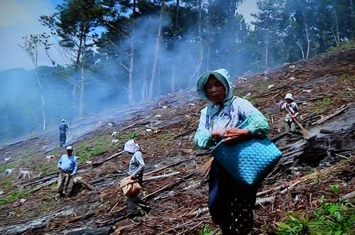 わが国最後の焼畑農業継承者_d0147406_7403158.jpg