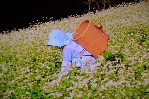 わが国最後の焼畑農業継承者_d0147406_7405767.jpg