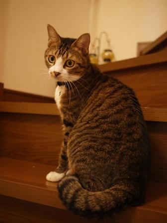 猫のお友だち じょあんちゃんはんくすちゃん編。_a0143140_2117778.jpg