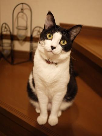 猫のお友だち じょあんちゃんはんくすちゃん編。_a0143140_21214438.jpg