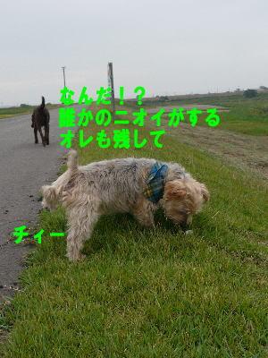 d0013645_14582990.jpg