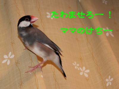 b0158061_0395232.jpg