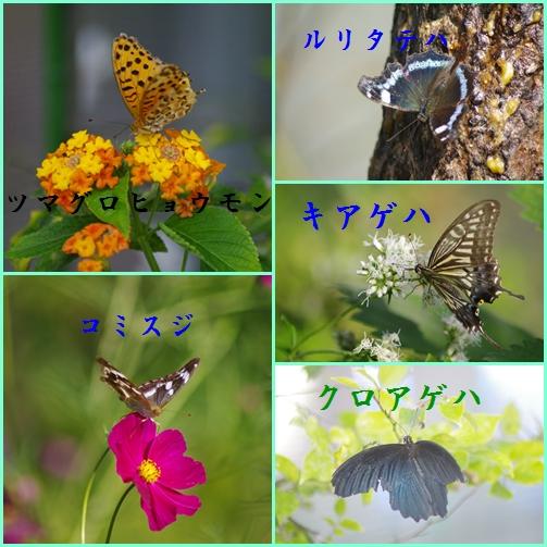 b0052108_1084460.jpg