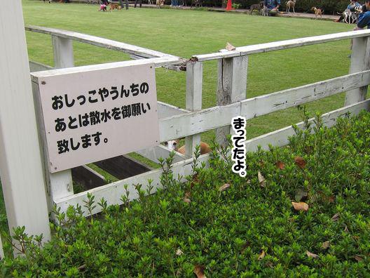 f0158862_20122988.jpg