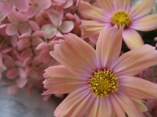 オークリーフ(秋色みなずきとコスモスの花束)_f0049672_16172726.jpg
