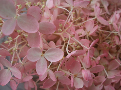 オークリーフ(秋色みなずきとコスモスの花束)_f0049672_16173870.jpg