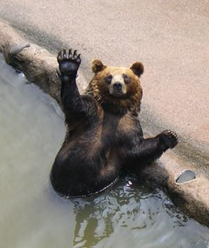 熊_b0186183_1811083.jpg