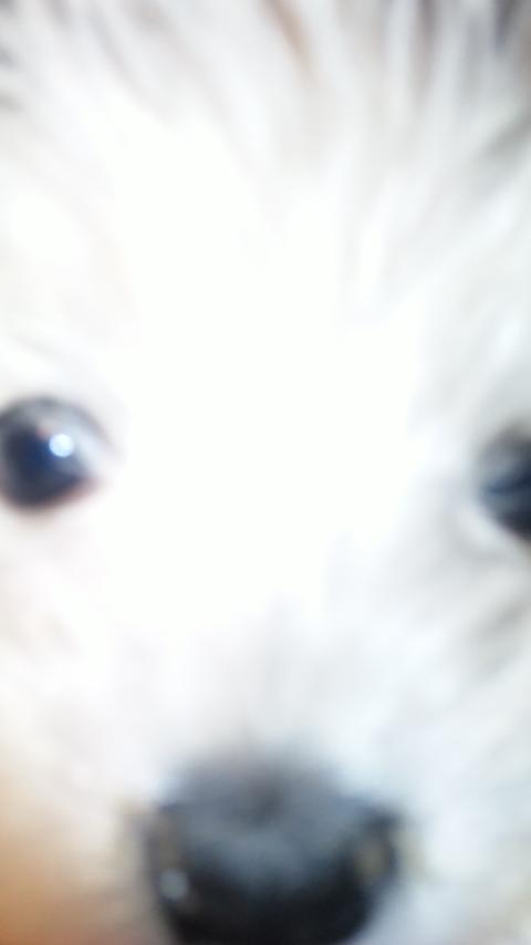 デジカメがアレなんでクララのパピー画像で!_c0226202_2132560.jpg