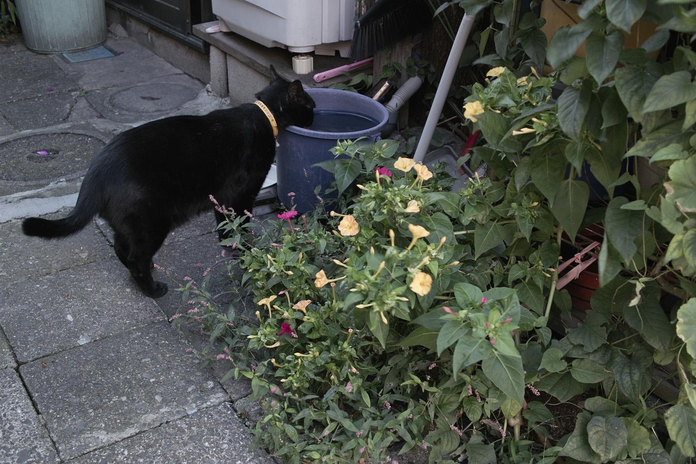 根津の猫、その2。_c0120903_183826.jpg