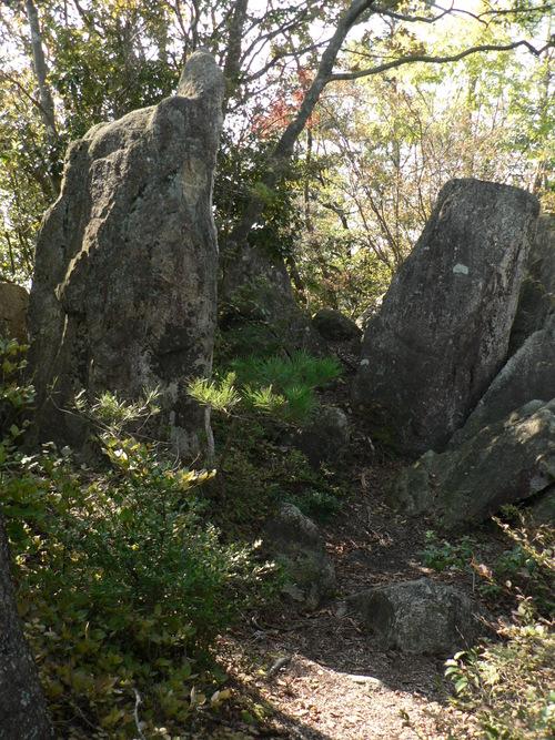 コウヤボウキ&ママコナ in  火山_f0219710_7374940.jpg
