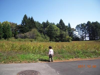 秋晴れのお散歩_b0197225_14511782.jpg