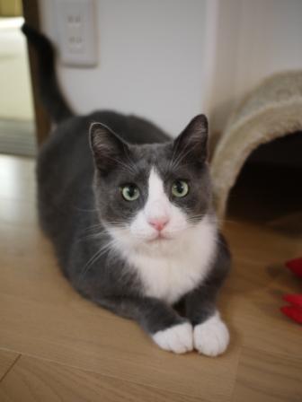 猫のお友だち カン太くん編。_a0143140_15244750.jpg