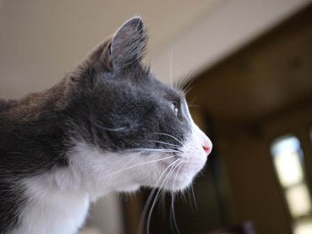 猫のお友だち カン太くん編。_a0143140_15324384.jpg