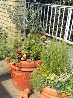 Garden!_a0229658_18482573.jpg