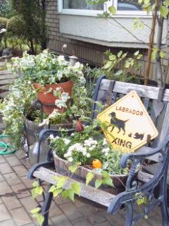 Garden!_a0229658_18544515.jpg