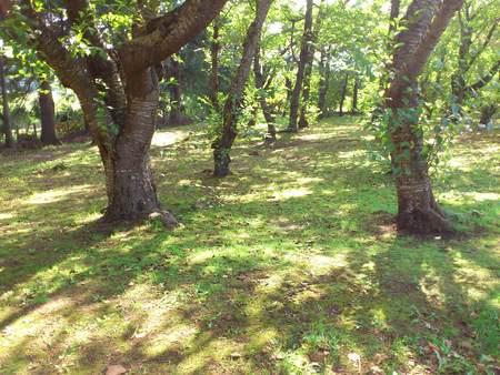 森林浴_b0106766_11143594.jpg