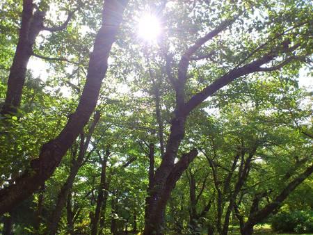 森林浴_b0106766_11143624.jpg
