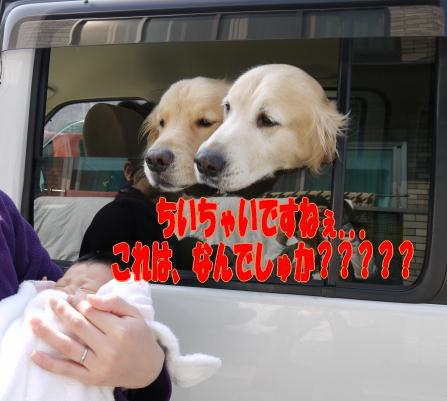 b0112568_16293772.jpg