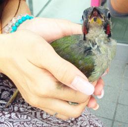 イヴサンローランのキーケースと、出逢った野鳥さんの名が判明。_d0224894_15371726.jpg