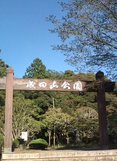 成田山のキンモクセイ!!_a0218119_105289.jpg