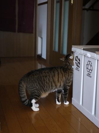 猫のお友だち じょあんちゃんはんくすちゃん編。_a0143140_19494924.jpg